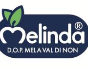 fly-new-melinda-logo-with-d